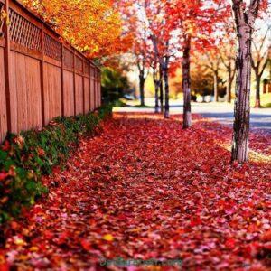 رمان باغ پاییز