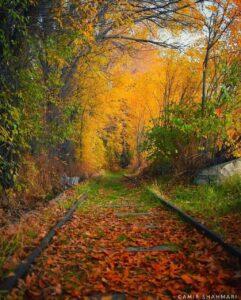 رمان بغض پاییز