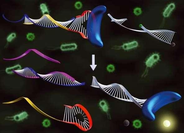 آموزش Real Time PCR – دانلود وبینار ضبط شده کاربردهای qPCR